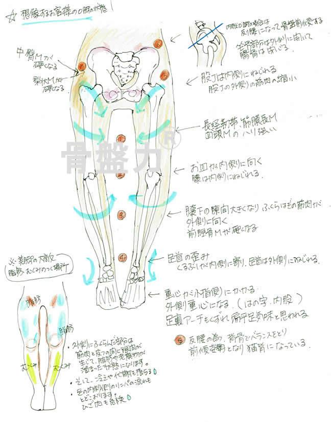 骨盤力とO脚