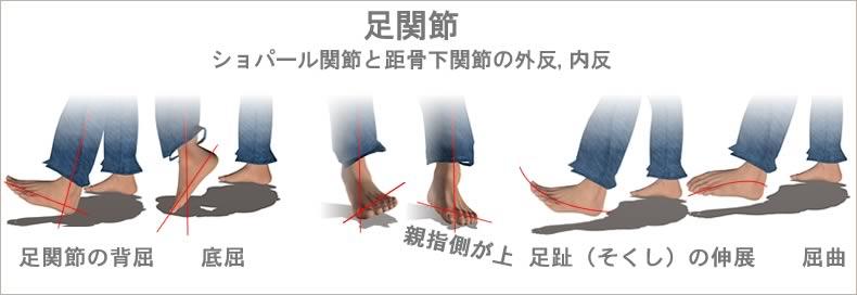 足の骨と関節