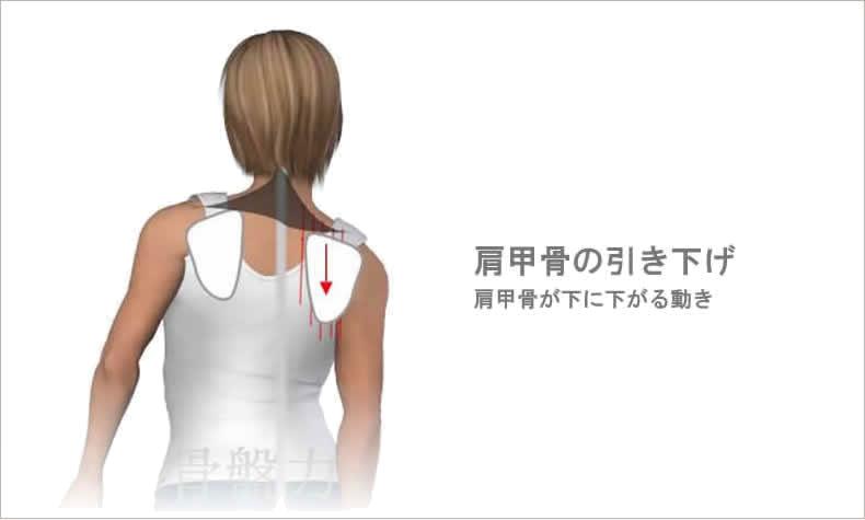 肩甲骨の引き下げ
