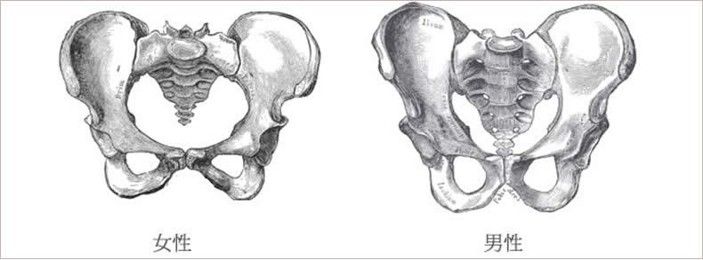 骨盤と男女