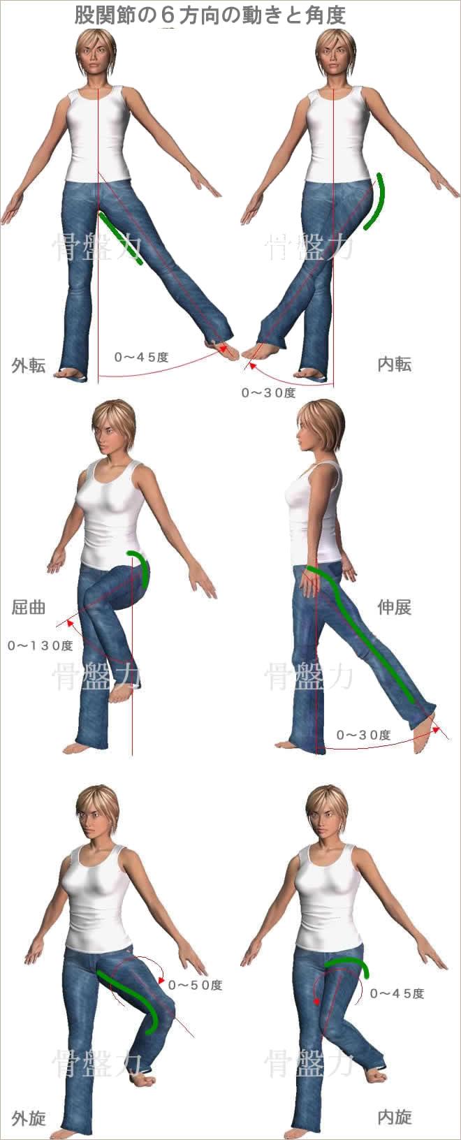 股関節6方向の動き