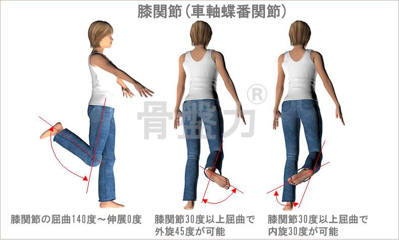 膝関節(車軸蝶番関節)