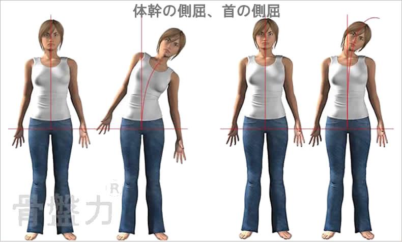 体幹の動き(側屈、首の側屈