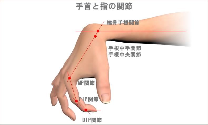 手関節と指関節の屈曲