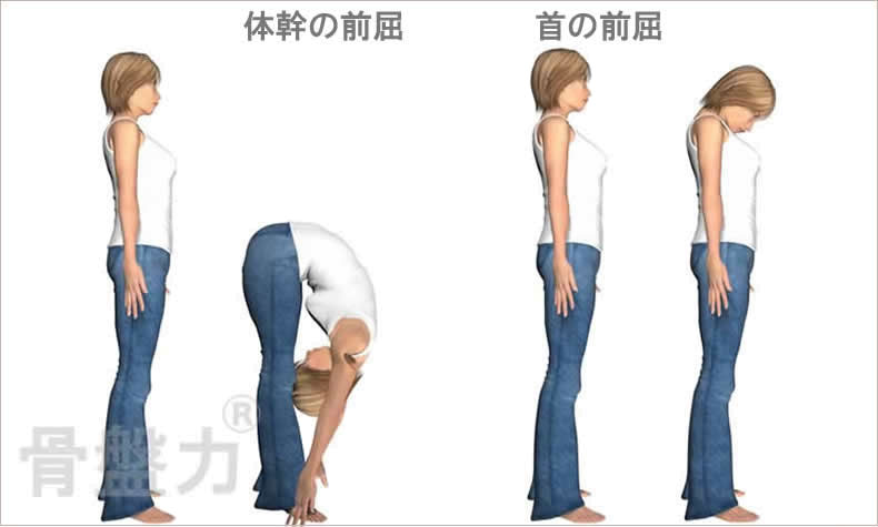 体幹の前屈、首の前屈